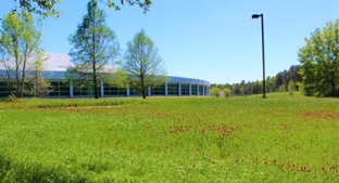 Clover field planted at McIntosh site